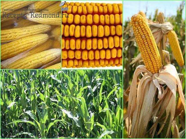 кукуруза в мультиварке редмонд на пару рецепт